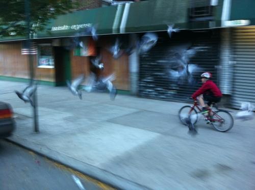 n_broadway_pigeons